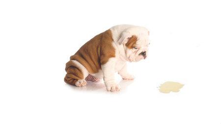 Cuidando tu mascota - Malos olores en casa ...